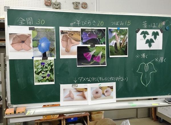 asagao1 (800x586).jpg